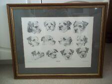 Border Terrier Dog Framed Picture Derek Homden