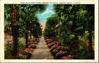 Palm Walk from Hotel Ormond to Beach, Ormond Beach FL c1933 Vintage Postcard I34