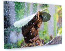 CUTE MONKEY IN THE RAIN ANIMAL CANVAS PICTURE PRINT CHUNKY FRAME LARGE #A393