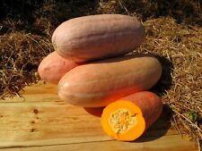 Pumpkin seeds Pink Banana Ukraine Heirloom Vegetable Seeds