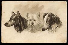 BELGIAN SHEPHERD DOG GROENENDAEL ROUGH COLLIE SHEEP DOG ANTIQUE POSTCARD - 1908
