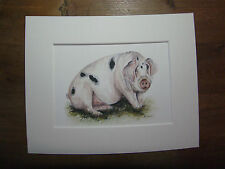 "Watercolour pig, print of original painting, in 10"" x 8"" Mount"