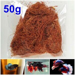 Dried Cutch Tree Acacia Catechu Aquariums Fermented Water Betta Fish Shrimp 50g