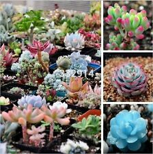 Succulent 100pcs Mix Lithops Pseudotruncatella Bonsai plants Seeds