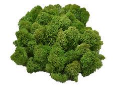 Muwse Islandmoos Köpfe Tannengrün V 50g gereinigt Konserviert Moos Grün Moss