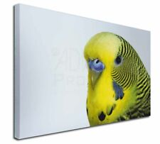 More details for yellow budgerigar, budgie x-large 30