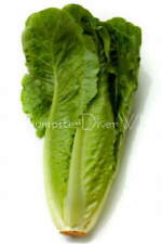 ORGANIC ROMAINE LETTUCE / Parris Island Cos 100+ seeds tasty NON-GMO Heirloom