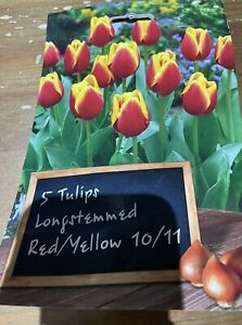 5 Tulip Tall Long Stem Bed Border Spring Flowers Bulbs Plants Red Yellow
