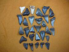 SW20-21) HALF POUND 8 oz. Fossil Shark Tooth teeth MEGALODON MAKO partial sharks