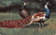 R298871 Peacocks. Ernest Nister. No. 110. E. P. Dutton