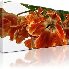 Blume Bild auf Leinwand. 80x45cm. Fertig gerahmt. Natur