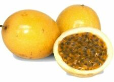 Organic Yellow Passion Fruit Seeds Sweet Fruit  Garden Bonsai