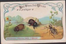 CHROMO ANCIEN-IMAGE INSECTES UTILES/ONTHOPHAGE VACHE-HISTER SINUE-REDUVE MASUEE