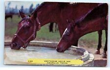 Vertreese Drive Inn Horses Drinking Water Amarillo Texas Vintage Postcard B29