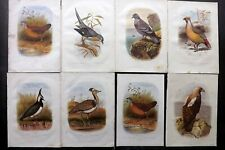Cassell & Rymer Jones 1869 Lot of 8 Antique Bird Prints. Book Plates