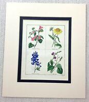 1824 Antik Botanische Aufdruck Rittersporn Lophospermum Blumenmuster Maund Rare