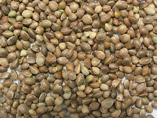 Wild Bird Seeds Organic Hemp Seed Bird Food 200g Feed Birds in Your Garden