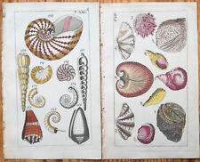 Wilhelm 2 Handcolored Prints Conchology Shell (1) - 1800