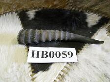 Springbuck horn Hb0059