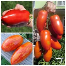 Seeds Tomato Pepper Uncle Stepan Feather Firebird Striped Vegetable Organic