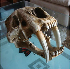 35*20*25CM Saber Tooth Cat Tiger Skull Sabertooth Smilodon Fatalis Model White