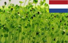TATSOI TAH TSAI Seeds Sprouting Organic 1900+(5G) Microgreens Anticancer Microgr