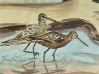 Vintage Watercolor Art SIGNED by Helen Anderson BEACH SAND PIPER Bird 21/23.5