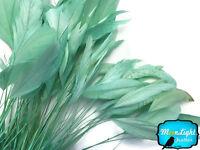 1 Dozen - Aqua Green Stripped Coque Tail Feathers
