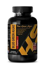 Blue green algae BLUE GREEN ALGAE immune support 1 Bottle 60 Capsules