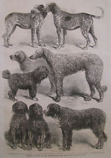 Dog Show Retrievers French Hounds Harrier 1863 Illustrated London News