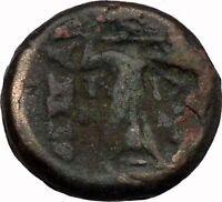 LARISSA Thessaly THESSALIAN LEAGUE 196BC Athena Apollo OWL Greek Coin i43499