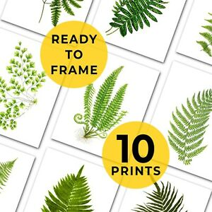 """Set Of Botanical Fern Prints, 10 Prints, Gallery Wall, Fits A4 and 8x10"""" Frames"""