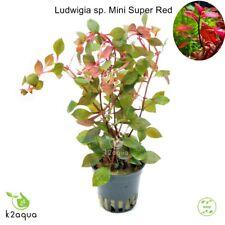 Ludwigia sp. Mini Super Red Live Aquarium Plants Tropical Aquascaping Tank EU