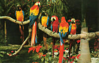 Postcard Parrots And Poinsettas