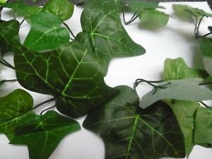 100 green ivy  leaves comes in  sets of  3 sprigs  DECORATION/CRAFT/wedding xmas