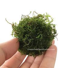 Java Moss - Vesicularia dubyana Live Aquarium Plants Moss BUY2GET1FREE*