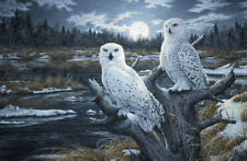 Photo Picture Poster Print Art A0 A1 A2 A3 A4 3561 SNOWY OWL Animal Poster