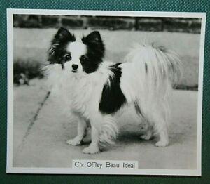 PAPILLON  High Quality Vintage Photo Card