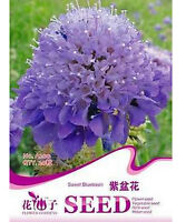 FD1759 Sweet Blue Basin Flower Seed Hot Seeds RARE ~1 Pack 50 Seeds~