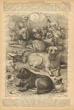 Prize, Dogs, Glasgow, Scotland, Dog Show, Mastiff, Bull Dog, 1871 Antique Print,