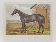 1898 Antique Print HORSE - HUNTER GLENGARRY Chromolithograph Mounted