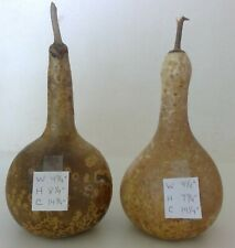 """25 Mini bottle gourds Good Shape dry and clean 2--2.5/"""" high"""