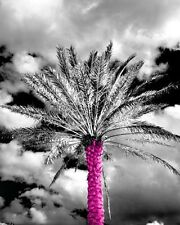 Pink palm tree black and white picture wall decor home interior art photograph