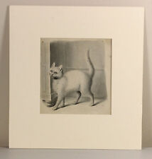 c1790s | Gottfried MIND | The White Cat | ORIGINAL fine watercolour painting