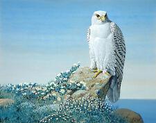 Fuertes Agassiz Louis Arctic Gyr Falcon Print 11 x 14  #3750