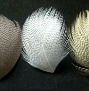 Mallard Flank Feathers Fly Fishing Tying for flies Superior Quality UK SELLER