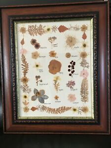 Pressed Flowers Labelled and Framed