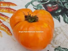 20 Chuck's Yellow Heirloom Tomato Seeds Called Many Moons by U. S. Natives