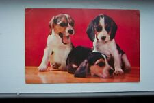 Greetings Postcard Beagle Pups Vintage Dated 1962 Collectible