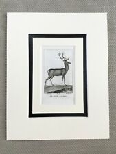 Antique Stag Deer Print 18th Century Engraving Buffon Animal Kingdom RARE